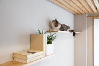 獣医師監修!猫と暮らすリノベーション個別相談会【渋谷ショールーム開催】